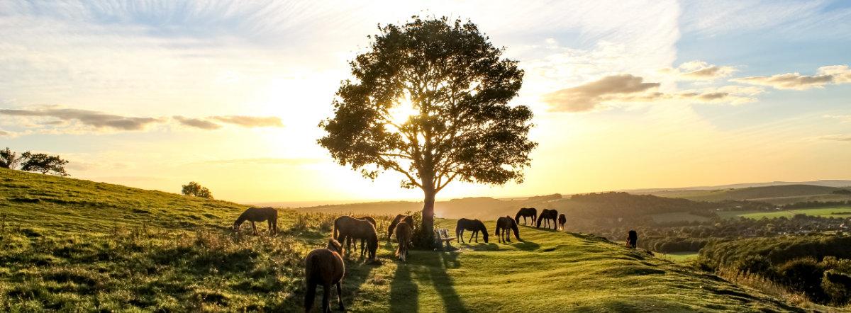 Pony Heaven photo by Joe James